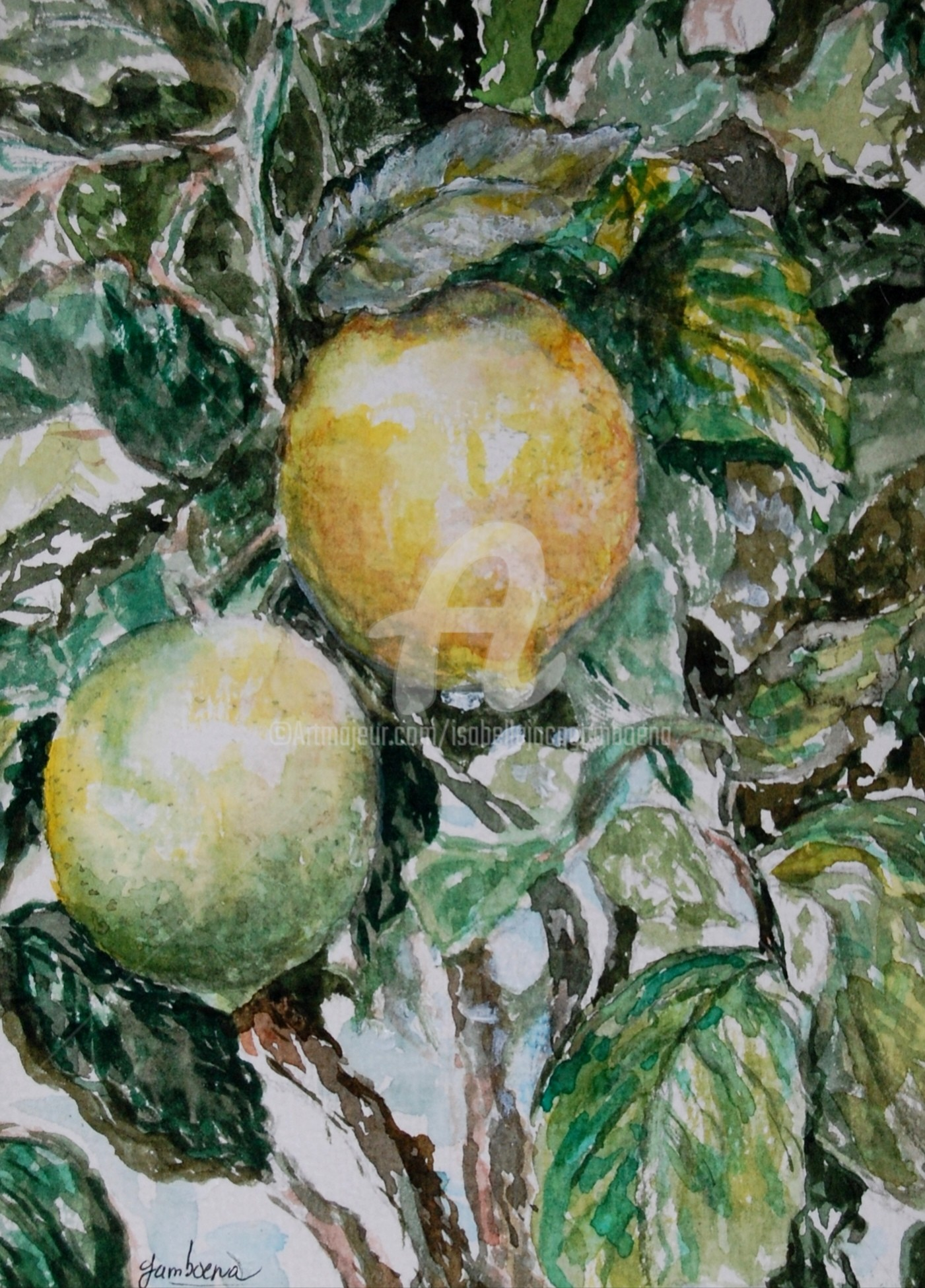 Isabelle Jacq Gamboena - Limones